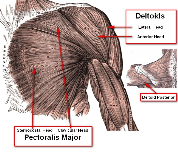 Anterior Shoulder Pain From Benching