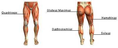 squat muscles 2