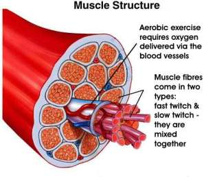 muscle twitch