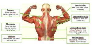 back-muscle-webpress