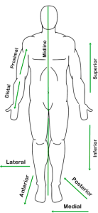 anatomical-directions-terms
