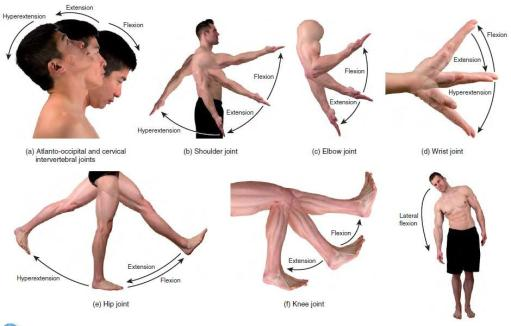 Image result for flexion
